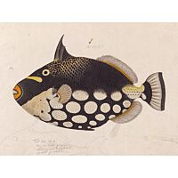Ixxi - Black Fish L - 160x120 cm.