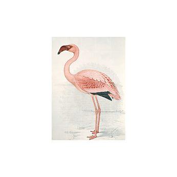 IXXI - Greater Flamingo